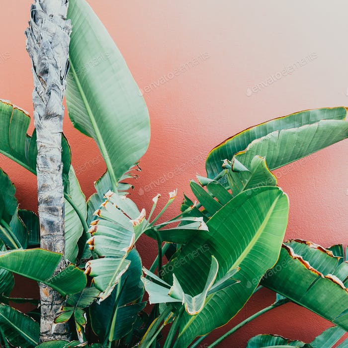 Tropical greens on a pink. minimal art design Fashion photo prin