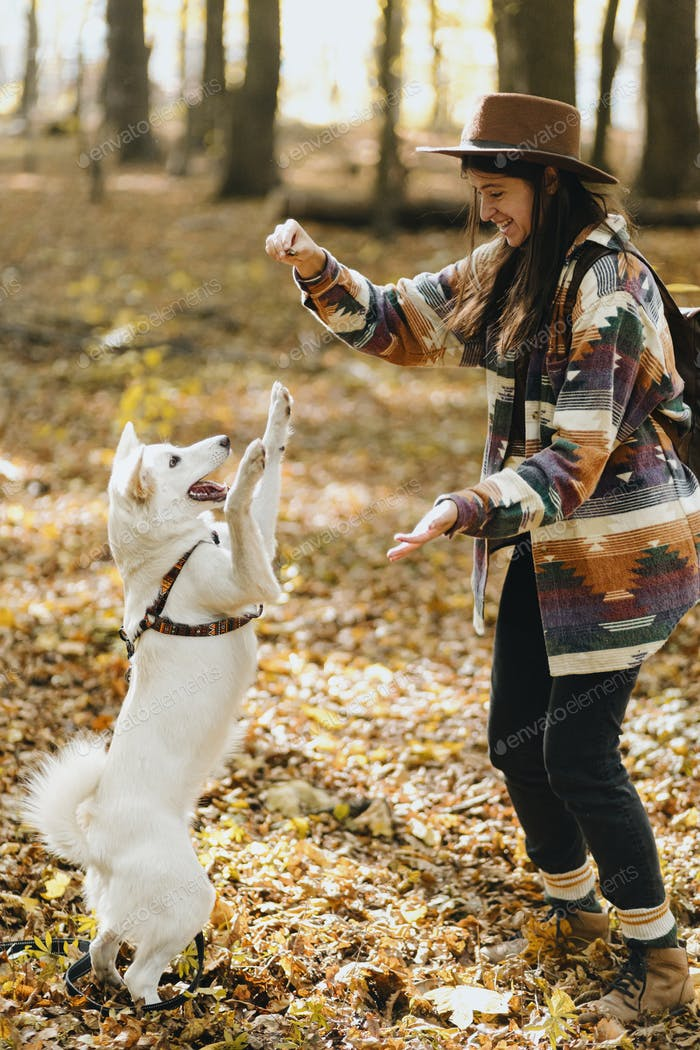 Stylish woman training white dog in sunny autumn woods. Cute swiss shepherd puppy learning