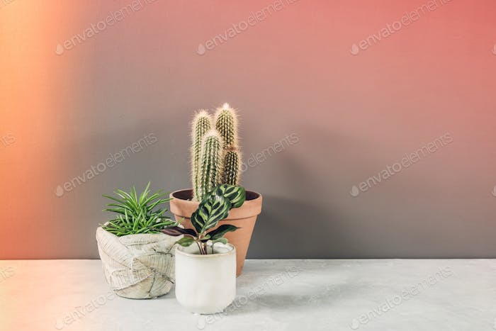 various cactus and succulent plants