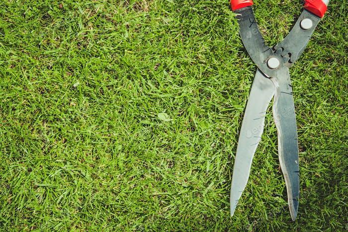 Garden Scissors Concept
