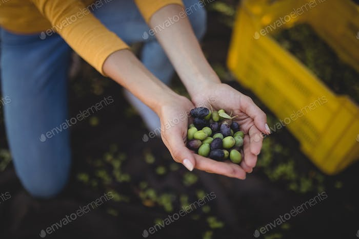 Woman holding olives while crouching at farm