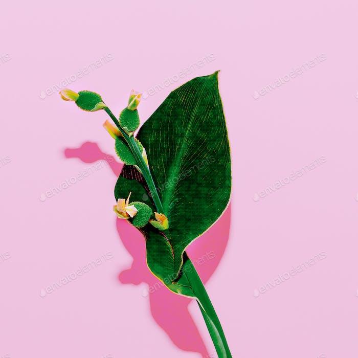 Minimal art. Plant on  pink. Stylish design  fashion