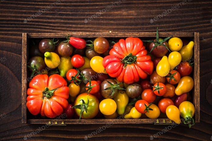 Freshly picked tomatoes in wooden crate