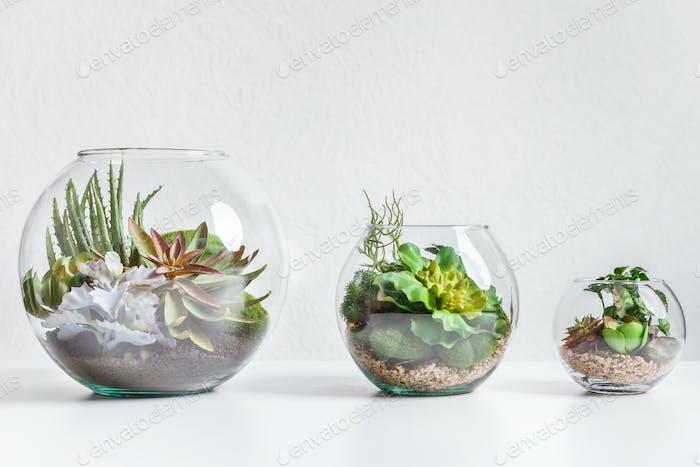 Forarium vases in row