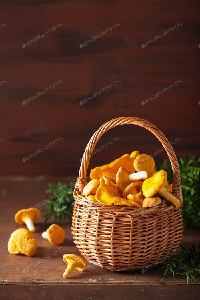 raw fresh chanterelle mushrooms on dark background
