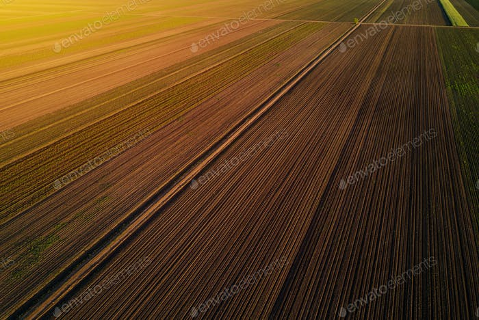 Aerial view of cultivated field in sunset