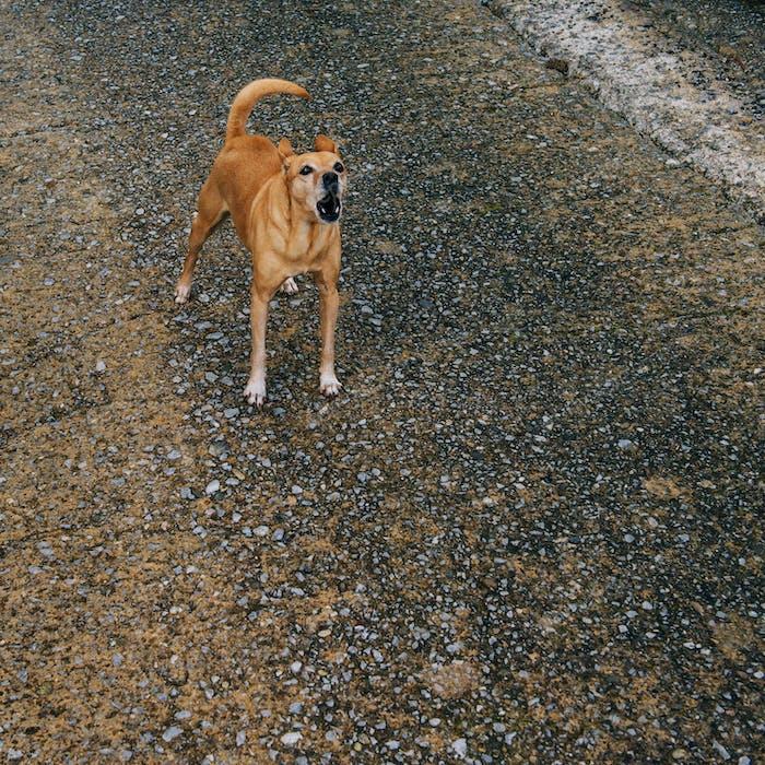 Hund bellt auf der Straße