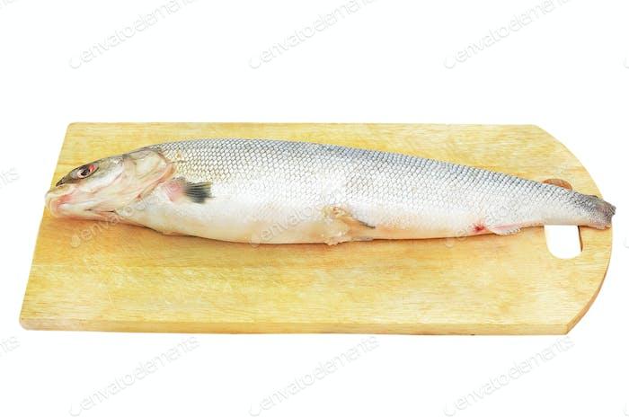 Raw fish on the kitchen blackboard