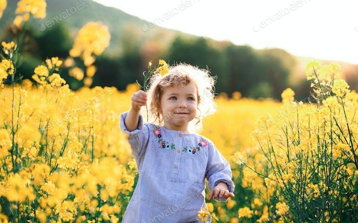Vorderansicht des glücklichen kleinen Kleinkindmädchens läuft in der Natur im Rapsfeld