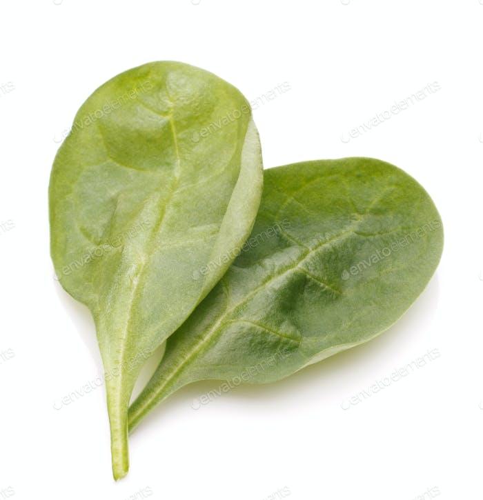 Spinat Gemüseausschnitt