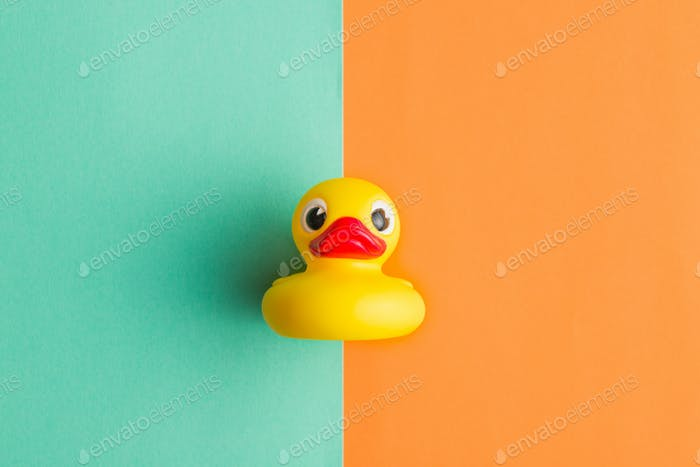 Flat lay of bath duck.