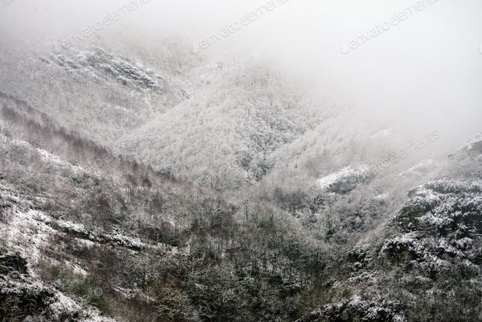 Snowy and foggy atmosphere on a gray and cold winter day in the forested mountains