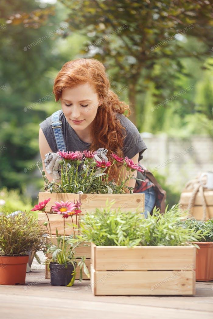 Frau pflanzt rosa Blumen
