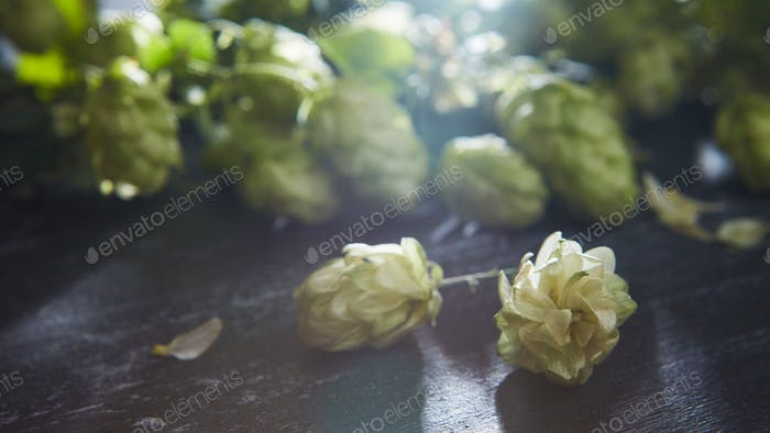 bunch of hop on a wooden table