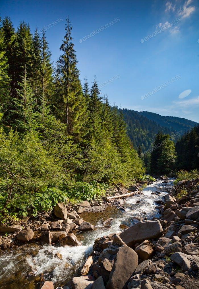 Mountain river stream. Summer nature landscape
