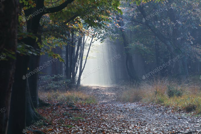 path in autumn misty forest