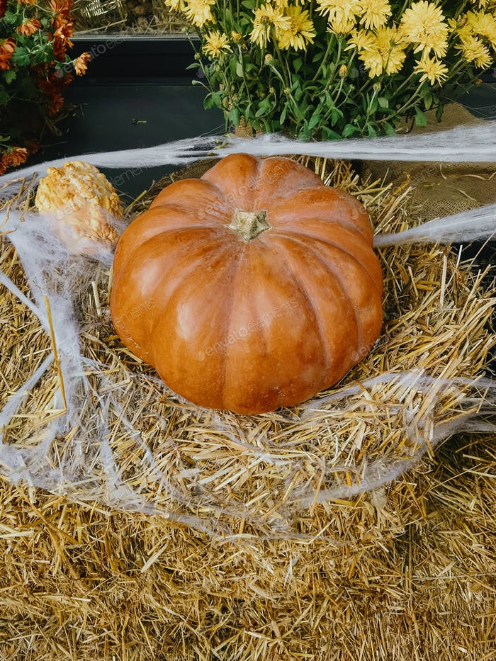 Pumpkin and autumn flowers with cobweb on hay bale