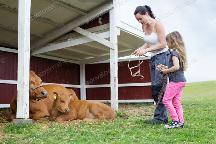 Mother with daughter (4-5) looking at cow with calf