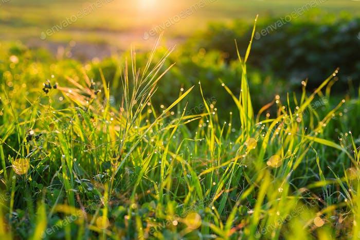 Wassertropfen auf dem grünen Gras in der Nähe