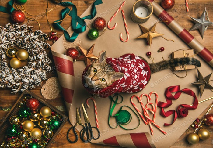 Flat-lay of Christmas decorations and cat in sweater