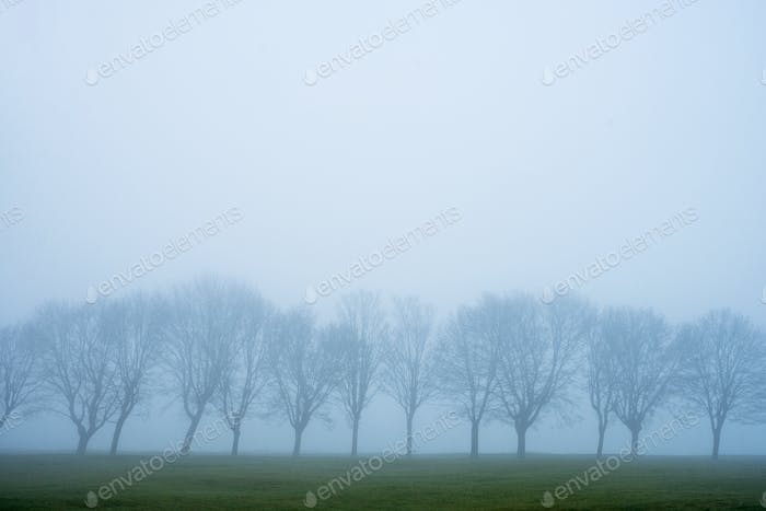 Misty landscape with grass and group of trees.