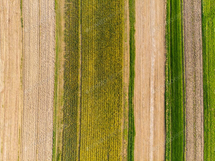 Narcissus fields and cultivate soil,aerial