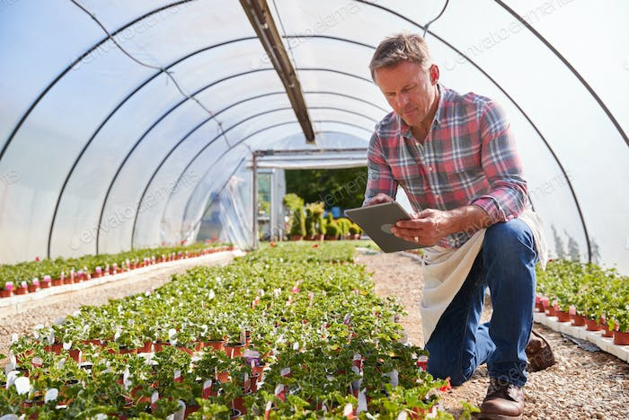 Mature Man Working In Garden Center Greenhouse Holding Digital Tablet And Checking Plants