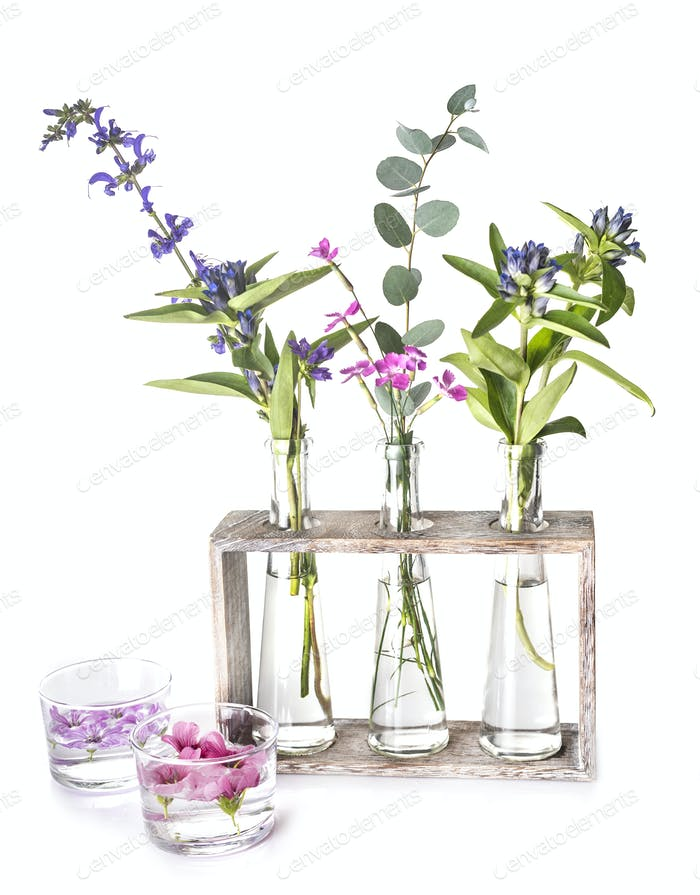 plants in test tube