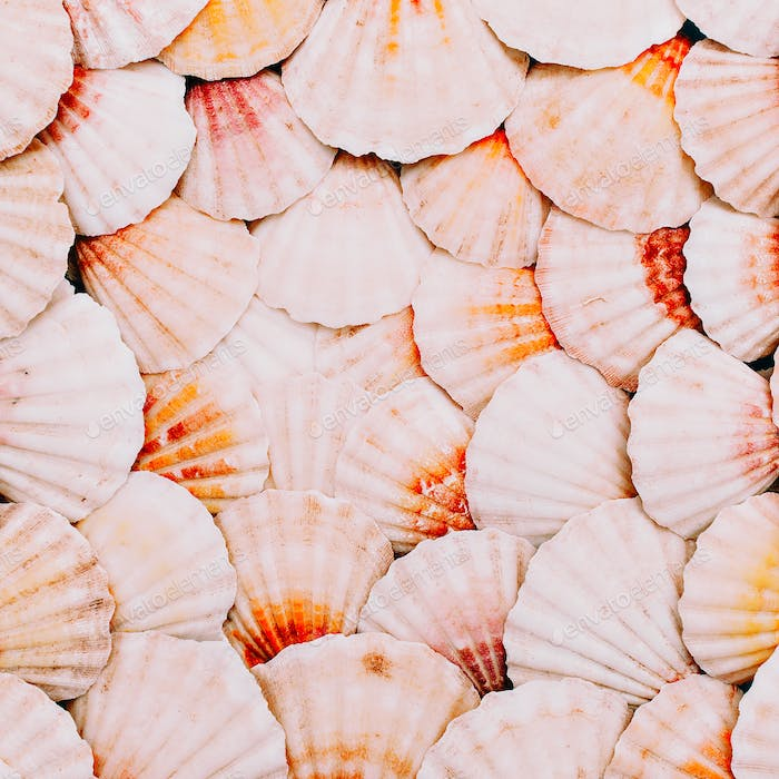 Seashells background. Ocean mood. Minimal art
