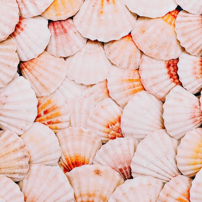 Seashells background. Ocean mood. Minimal art