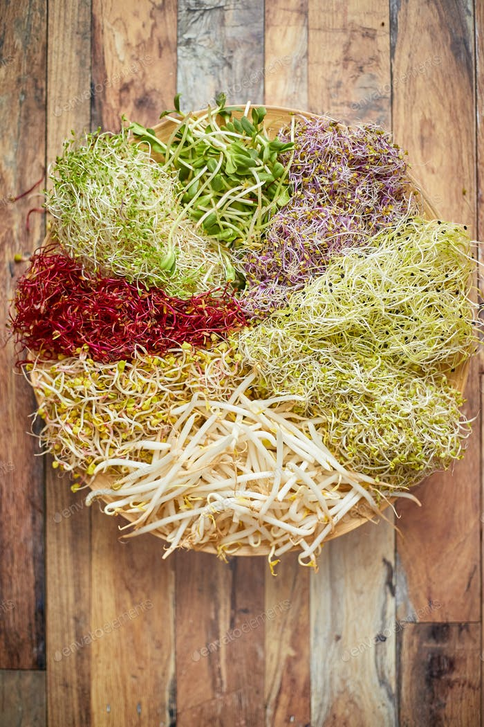 Vegetarisches Konzeptessen. Eine Reihe von verschiedenen gekeimten Samen für gesundes Essen auf einem Holzteller