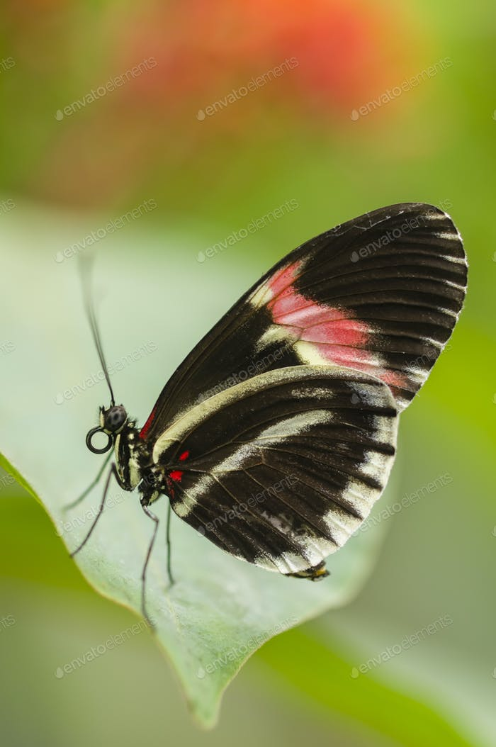 Tropical butterfly side view