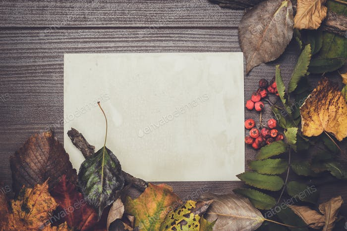 colorful autumn leaves and blank sheet of paper background