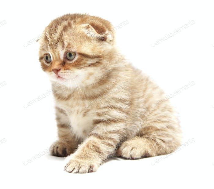 Schöne kleine Katze