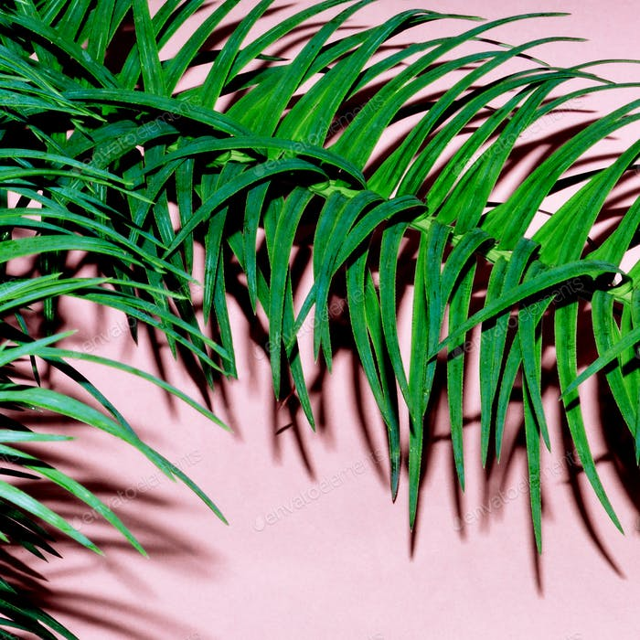 Tropical plant on pink. Minimal fashion art design