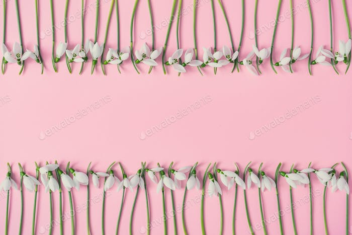 Creative layout made with snowdrop flowers on pink background. Minimal nature love background.