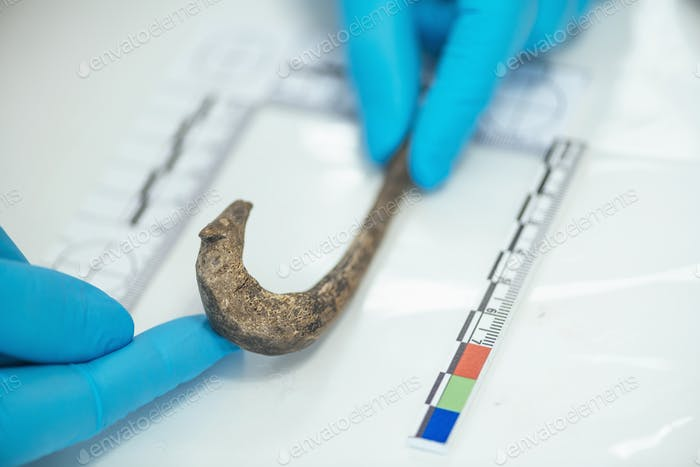 Archaeologist Measuring Ancient Hook