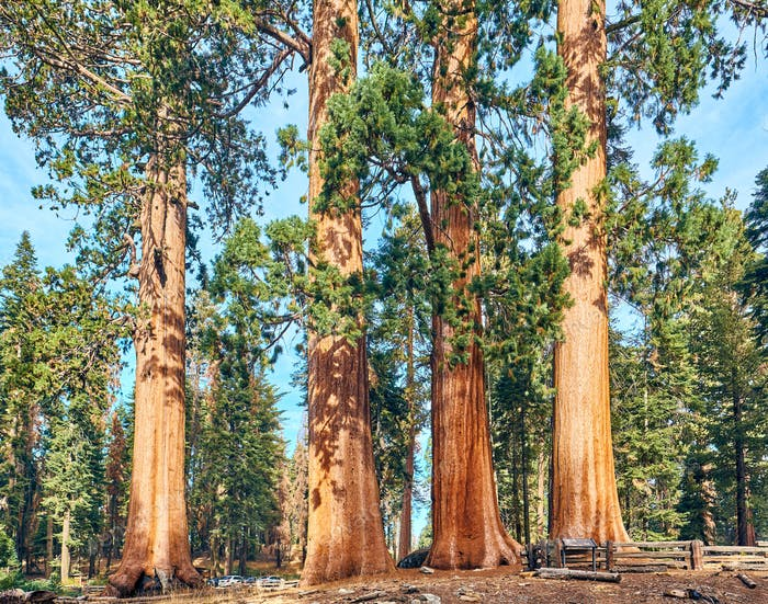 Sequoia National Park at autumn