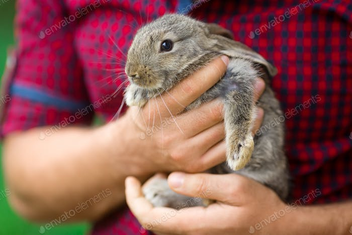 Rabbit. Animals and people