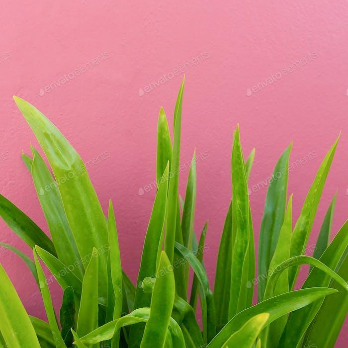 Plant on pink. Plant lovers. Minimal fashion design
