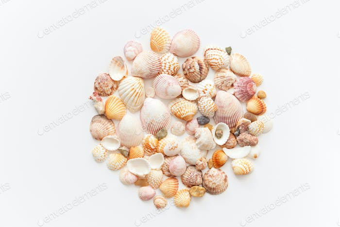 Plenty amazing seashells shape round, top view isolated on white