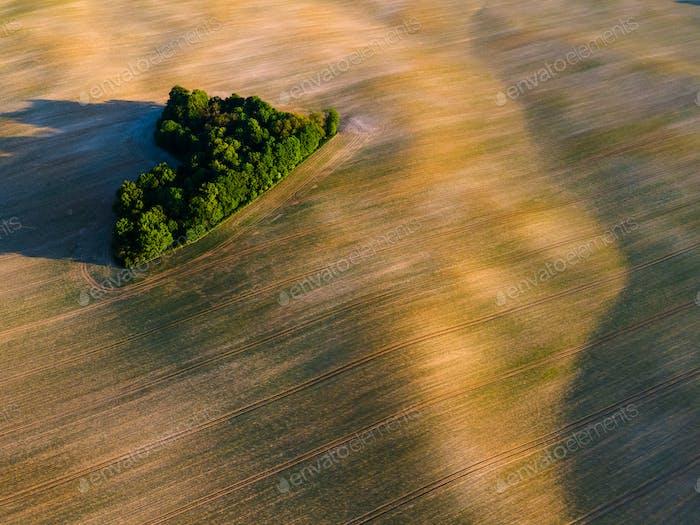 Trees on Farm Field. Aerial Drone View