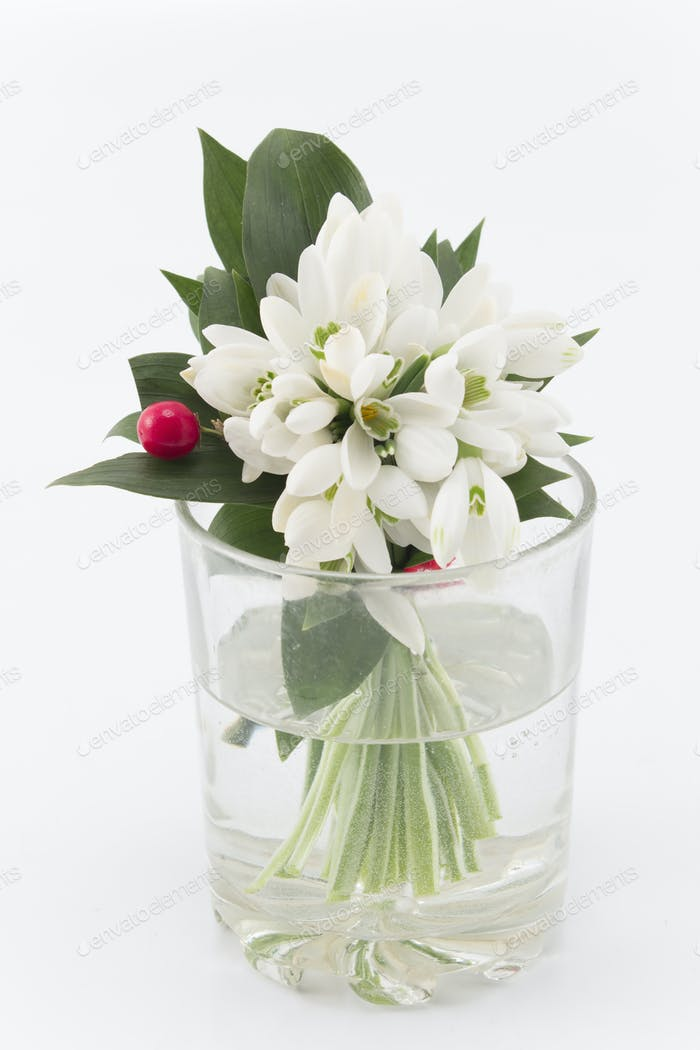 Bouquet of Fresh Snowdrops in a Glass of Water