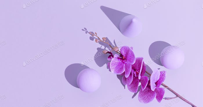 Abstract geometry and flowers minimal background. Pastel purple trendy colours. Still life concept