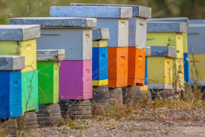 Colorful bee hives in a row