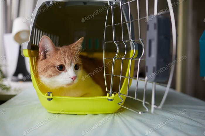 Cat sitting in the cage