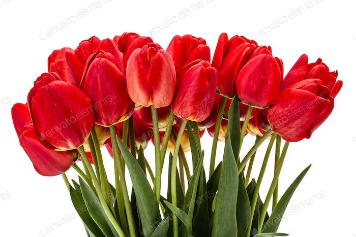 Bouquet of red flowers tulips, isolated on white background