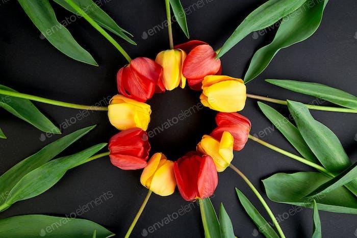 Concepto tulipanes