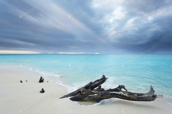 Caribbean Beach Driftwood With Dramatic Sky, Antigua
