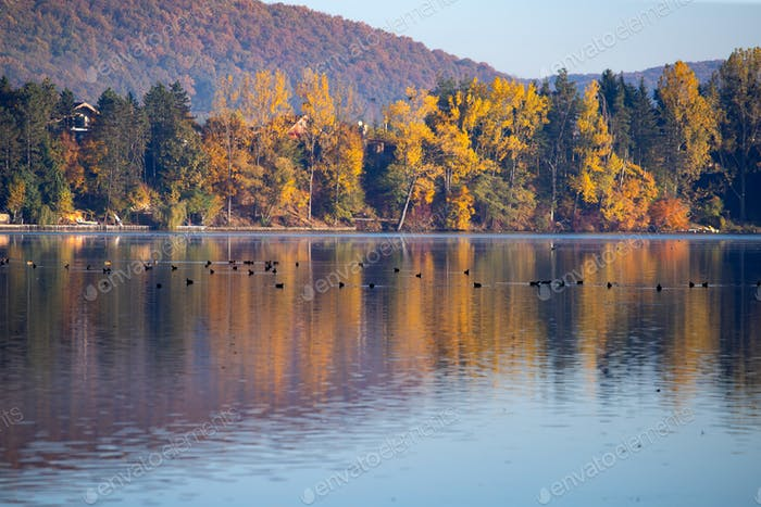 Golden autumn trees and lake. Autumn landscape, sunny morning.